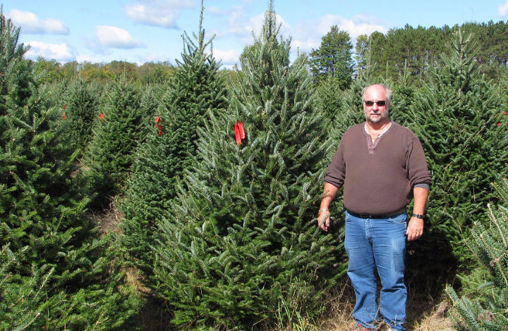 Canaan / Balsam Fir | Wholesale Christmas Trees