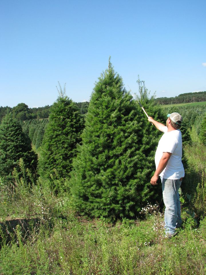Christmas Tree Farms Michigan