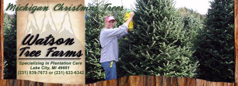 welcome to watsons wholesale christmas tree farms